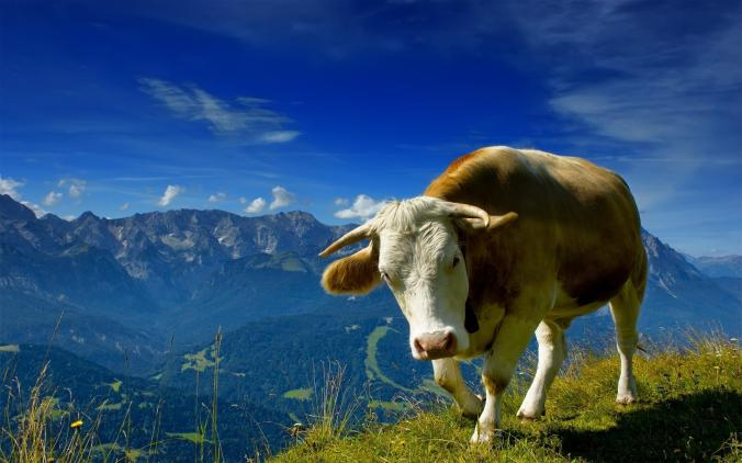 8589130516317-bull-on-top-of-the-mountains-wallpaper-hd.jpg